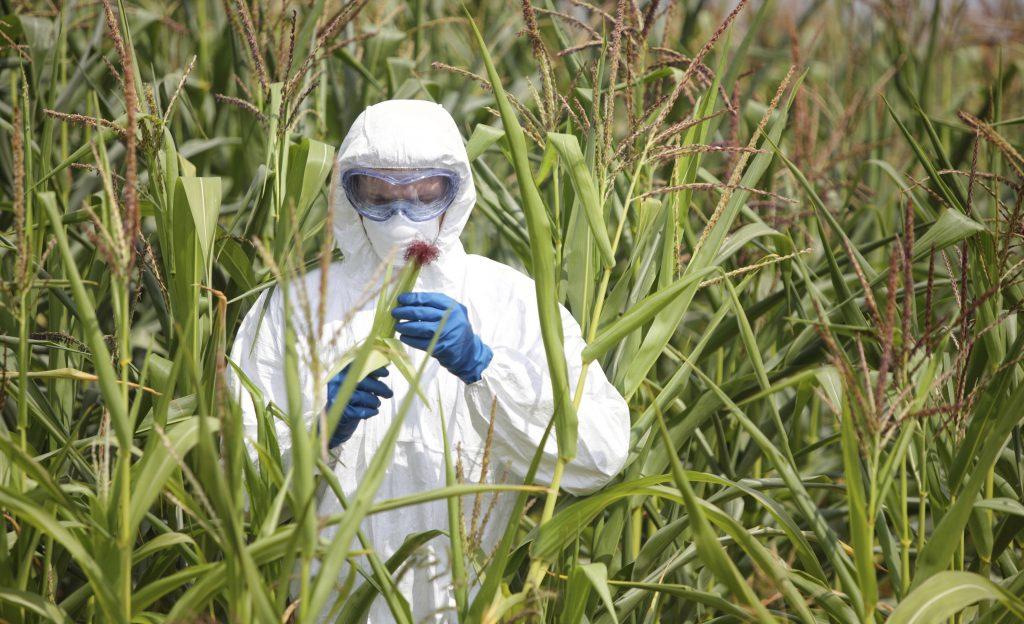Вредна ли е за здравето консумацията на ГМО
