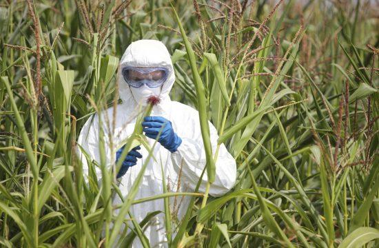 Какво е ГМО и трябва ли да ни плаши?