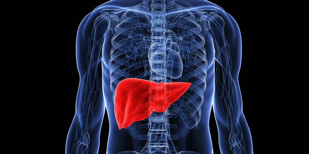 чернят дроб – за какво отговаря
